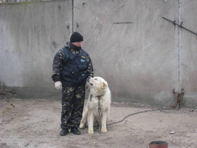 Охранник с собакой
